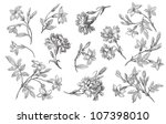 old flowers illustration | Shutterstock . vector #107398010