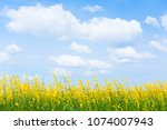 Green Field With Yellow Flowers ...