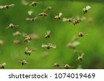 Front View Of Flying Honey Bees ...