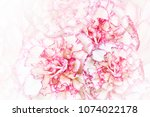 floral  white pink background.... | Shutterstock . vector #1074022178