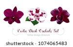 watercolor style dark orchid... | Shutterstock .eps vector #1074065483