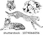 vector drawings sketches... | Shutterstock .eps vector #1074066056