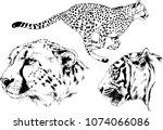 vector drawings sketches...   Shutterstock .eps vector #1074066086