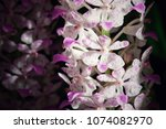 tiny white and purple orchids... | Shutterstock . vector #1074082970