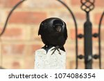 jackdaw perched on a fence post | Shutterstock . vector #1074086354