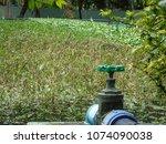the aquatic plant nursery at...   Shutterstock . vector #1074090038