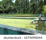 the aquatic plant nursery at...   Shutterstock . vector #1074090044