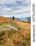 Small photo of Grass and wild flowers on a hill overlooking the natural harbour of Akaroa, South Island, New Zealand