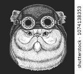 Portrait Of Fluffy Persian Cat...