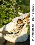 animal skull with open mouth ... | Shutterstock . vector #1074140390