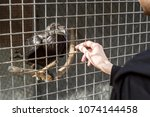 black raven in a cage and a man'... | Shutterstock . vector #1074144458