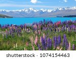 lupins at lake tekapo new... | Shutterstock . vector #1074154463