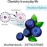 antioxidants in blueberries.... | Shutterstock .eps vector #1074155060
