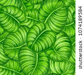 calathea leaves painted with... | Shutterstock . vector #1074189584