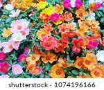 top view of colorful common... | Shutterstock . vector #1074196166