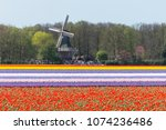 dutch bulb flowerfield near... | Shutterstock . vector #1074236486