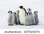 emperor penguin with children ... | Shutterstock . vector #107424374