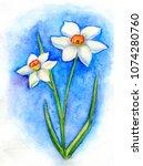 Two White Daffodils