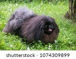 Cute Black Puppy Funny...