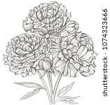 peonies flowers bouquet | Shutterstock . vector #1074323666