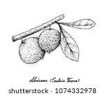 tropical fruits  illustration... | Shutterstock .eps vector #1074332978