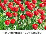 garden with tulip flowers in... | Shutterstock . vector #107435360