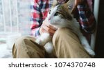 the man is combing out the cat. ... | Shutterstock . vector #1074370748