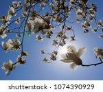 Sun Is Shining Through White...