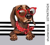 dachshund dog in a red... | Shutterstock .eps vector #1074475424