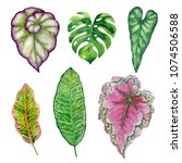 watercolor hand painted leaves... | Shutterstock . vector #1074506588