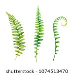 watercolor hand painted leaf of ... | Shutterstock . vector #1074513470