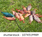 variety of tropical fishes... | Shutterstock . vector #1074519989