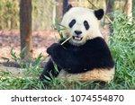 giant panda  ailuropoda...   Shutterstock . vector #1074554870