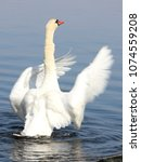 swan white has his wings out    Shutterstock . vector #1074559208