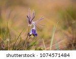 beautiful closeup prairie flower   Shutterstock . vector #1074571484