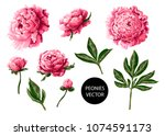 peonies flowers isolated on a... | Shutterstock .eps vector #1074591173