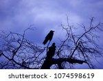 Raven Silhouette Against Storm...