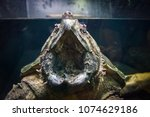 wide open mouthed alligator... | Shutterstock . vector #1074629186