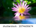 close up of pink lotus or... | Shutterstock . vector #1074630674
