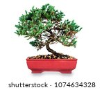 pine juniper bonzai on white...   Shutterstock . vector #1074634328