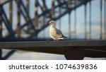 australia silver gull bird   Shutterstock . vector #1074639836