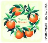 orange fruits  leaves and... | Shutterstock .eps vector #1074673256