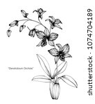 orchid flower drawing... | Shutterstock .eps vector #1074704189