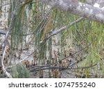 wandering through the wetlands... | Shutterstock . vector #1074755240