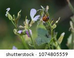 insects colony in garden | Shutterstock . vector #1074805559