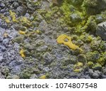 sulphur gas coming out of the... | Shutterstock . vector #1074807548