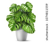 monstera in a pot. tropical... | Shutterstock .eps vector #1074811559