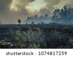 forest fire  burning peat