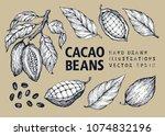 cocoa beans vector illustration ... | Shutterstock .eps vector #1074832196