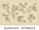 orchids illustration | Shutterstock . vector #107486123